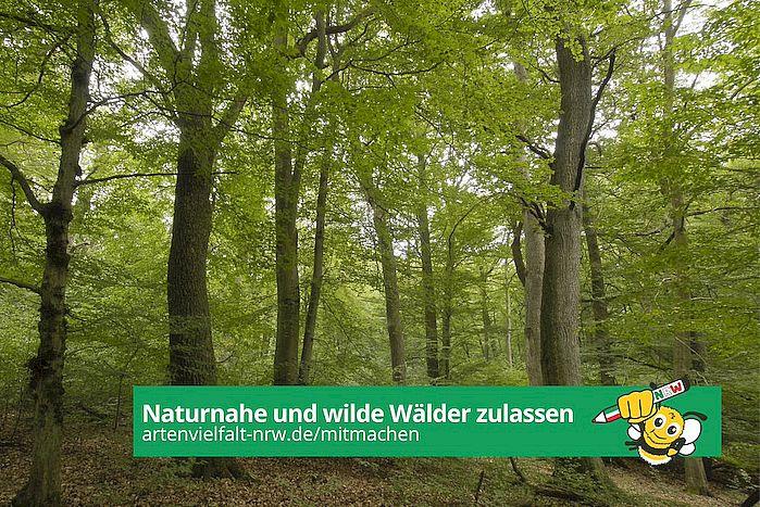 Volksinitiative Artenvielfalt: Naturnahe und wilde Wälder zulassen