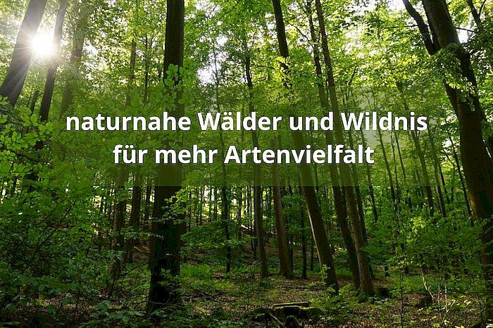 Naturnahe Wälder und Wildnis für mehr Artenvielfalt
