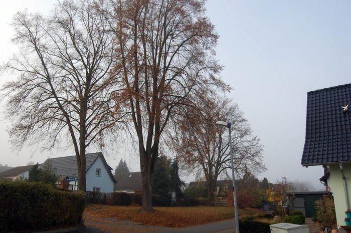 Sommer-Linden Ecke Grabenstraße und Paul-Wigand-Straße
