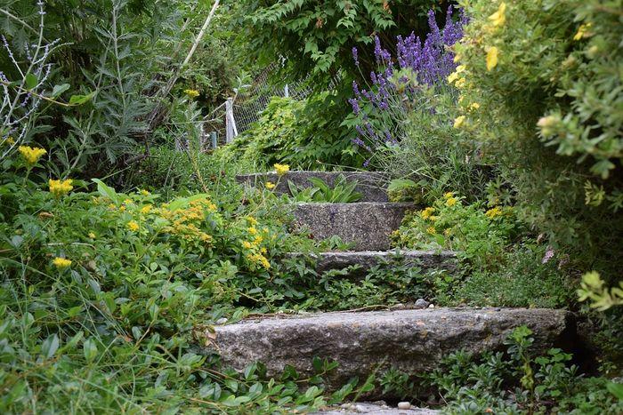 Naturnah gärtnern ohne Gift