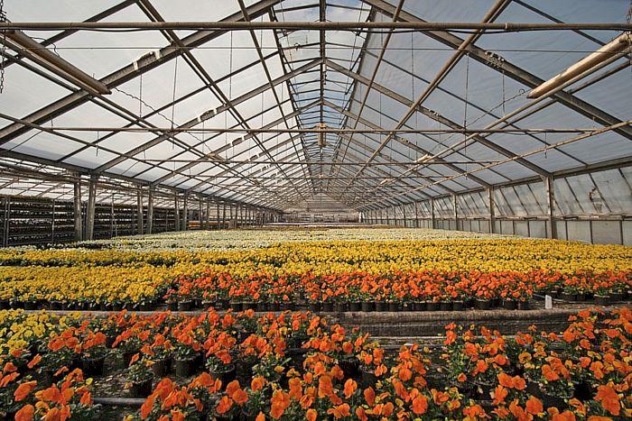 Zier- und Blühpflanzen können Rückstände bienengefährlicher Pestizide enthalten