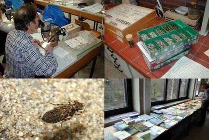 Seminar: Bestimmung und Ökologie von Libellenlarven und deren Exuvien