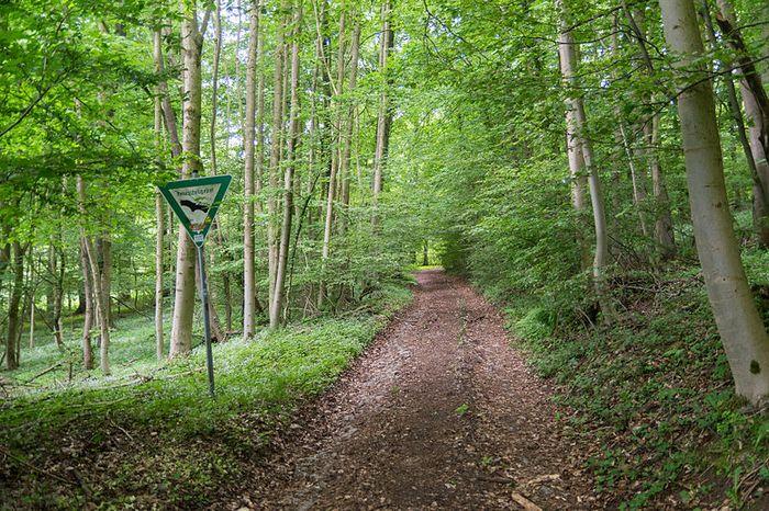 """NSG Buchenwald bei Bellenberg"""""""