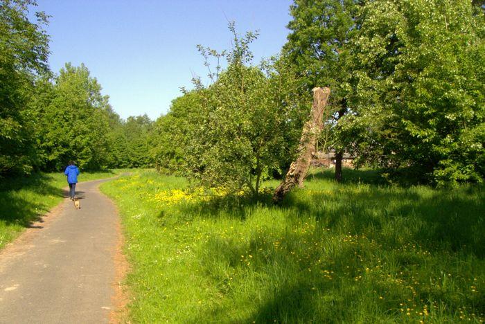 Rad- und Fußweg an der Schelpe in Höxter mit naturnahem Begleitgrün und ökologisch wertvollem aufrechten Alt- bzw. Totholz