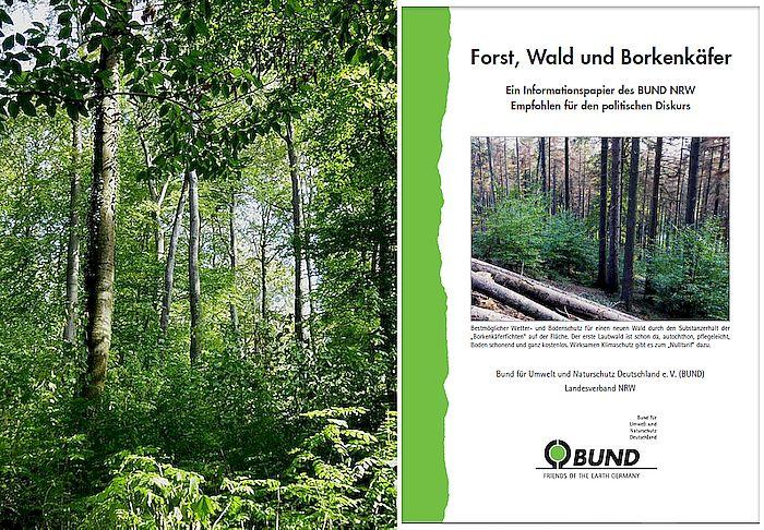 Broschüre: Forst, Wald und Borkenkäfer